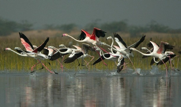Nal Sarovar Bird Sanctuary, Surendranagar